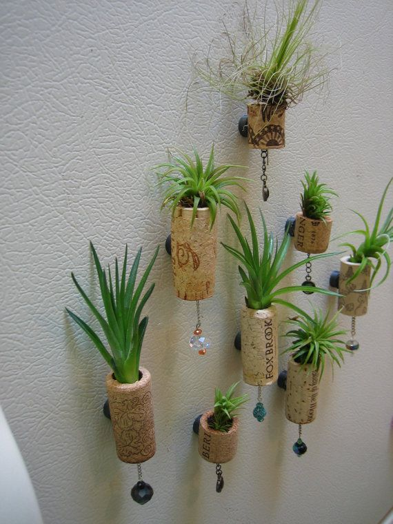 Set Of 5 Unique Air Plant Cork Succulent Magnet Fridge Decoration Refrigerator Decal Planter Box Vase Pot Gift Wine Bottle Tiny Small Little...