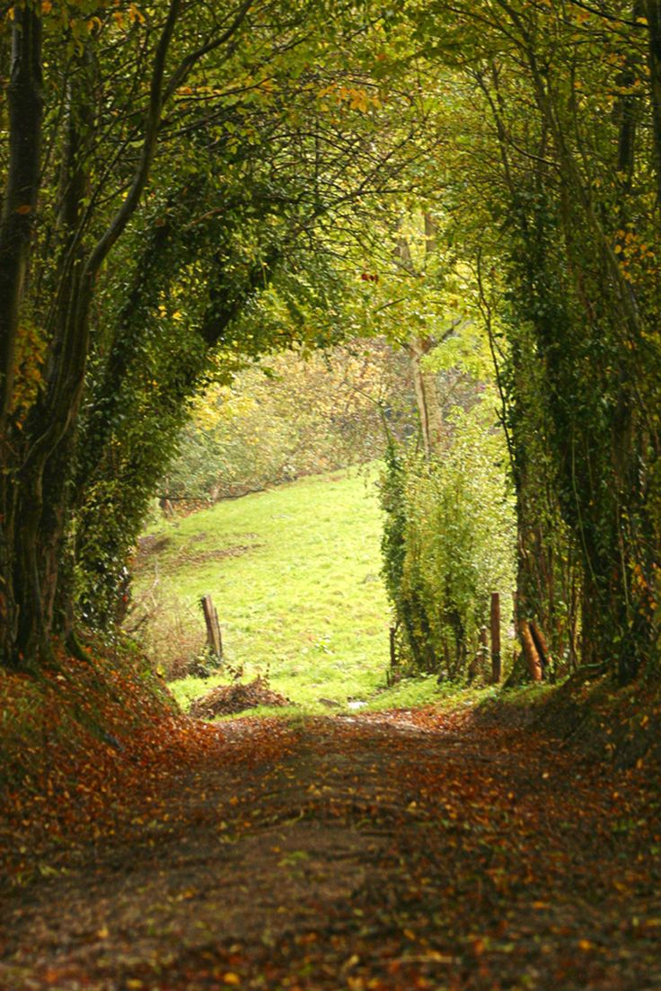 Peephole to a sunlit meadow....