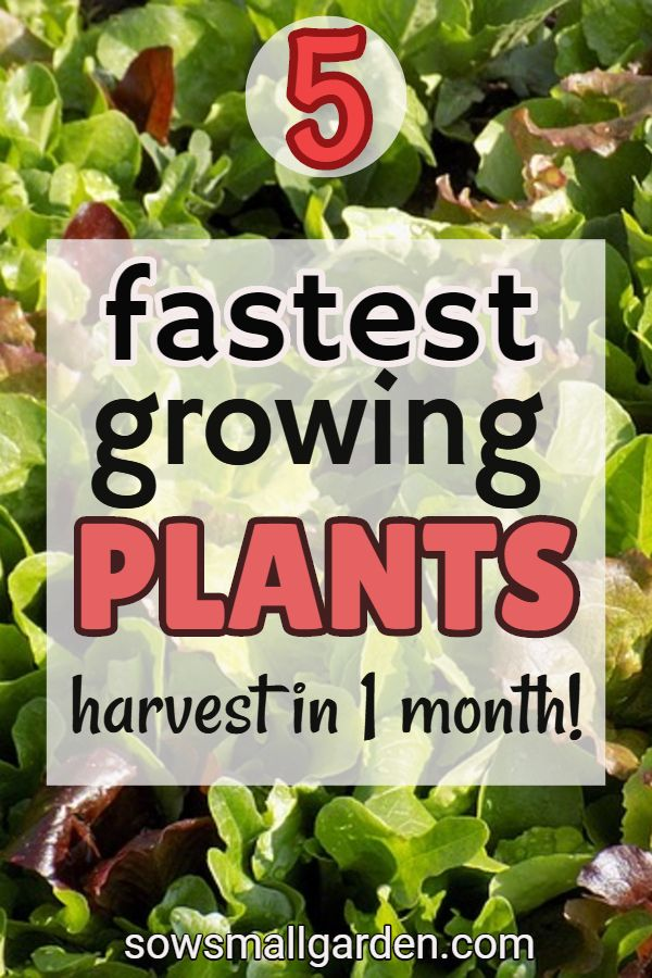 5 Fastest Growing Vegetables To Plant In Spring And Late Summer Sow Small Garden Fast Growing Plants Fast Growing Vegetables Growing Vegetables