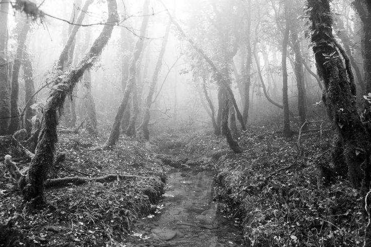 Subiendo a la niebla - El bosque lluvioso de los alcornocales, un rincón escondido donde parece que el ser humano no ha pisado nunca... Los arboles se alzan mimetizandose con la densa niebla....