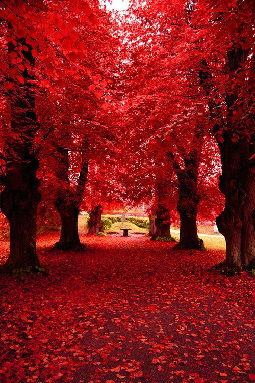 Path through the red trees