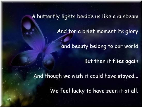 No more butterflies relationship