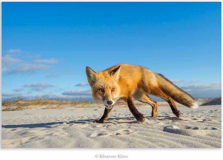 Photo The Beach Bum by Khurram Khan on 500px