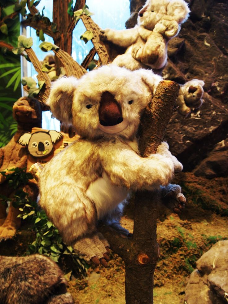 December 2011 - Teddy Bear Museum at Jeju Island, South Korea. Cute stuff toys in the museum are really cute! How I wished I could bring them all home... Especially this Koala Bear soft toy! It is just telling me to bring it home! >