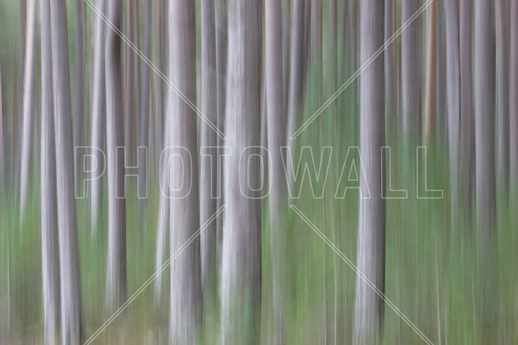 Pine Trees - Wall Mural & Photo Wallpaper - Photowall