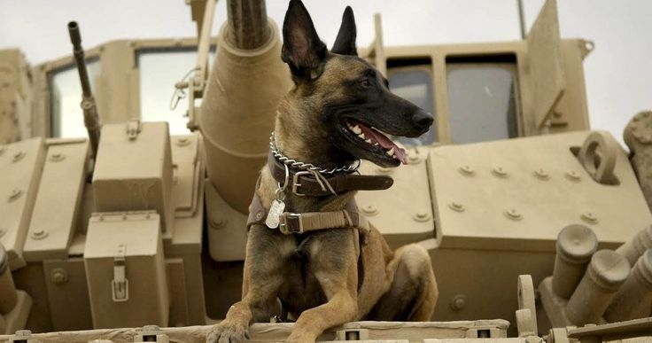 'Max' Trailer: The 'American Sniper' of Dog Movies -- A precision-trained military dog finds a new home in the first trailer for the true-life adventure drama 'Max'. -- http://www.movieweb.com/max-movie-trailer-2