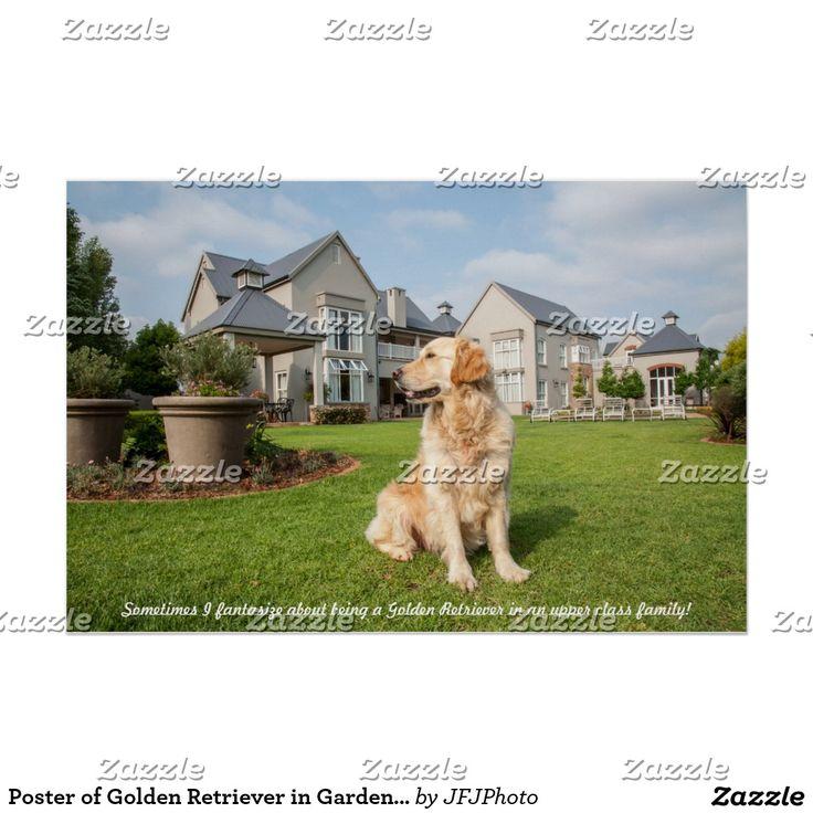 Poster of Golden Retriever in Garden with Quote
