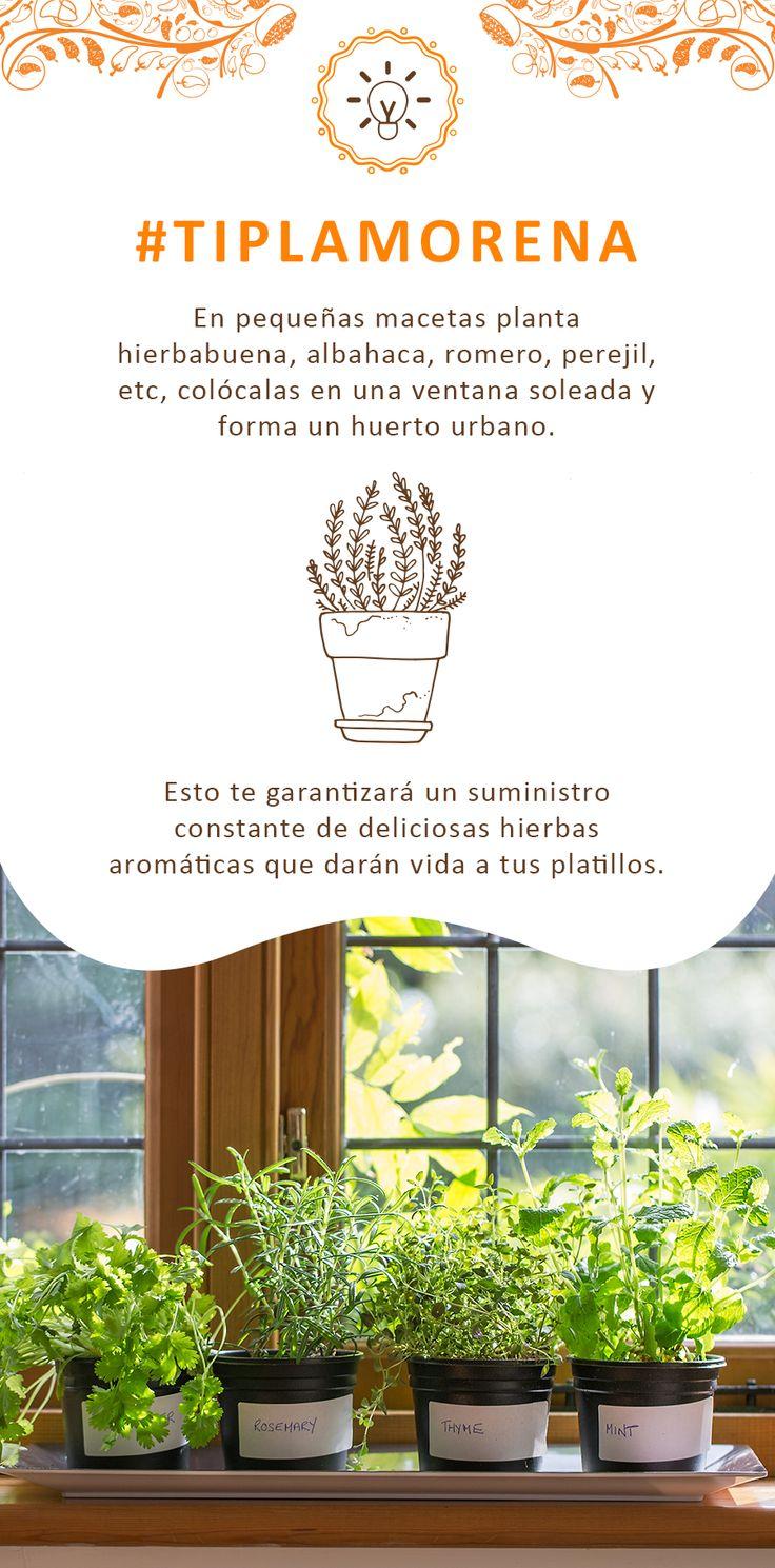 ¿Tienes un pequeño espacio en la ventana? ¡Crea un huerto urbano!