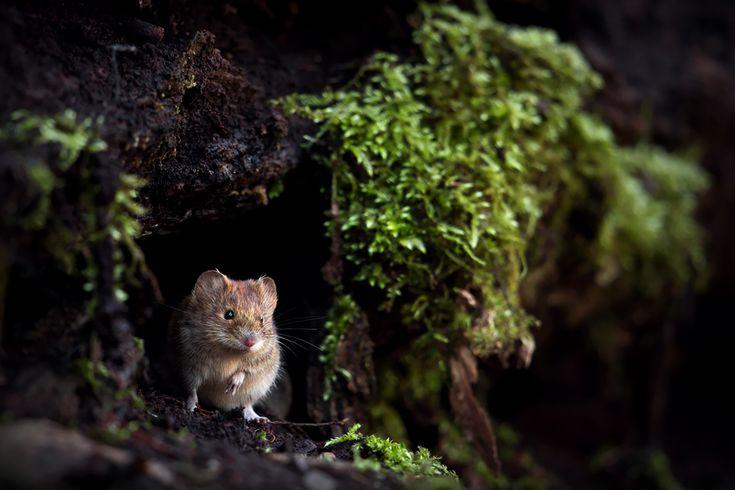 ~ Am Waldboden ~ (Forum für Naturfotografen)