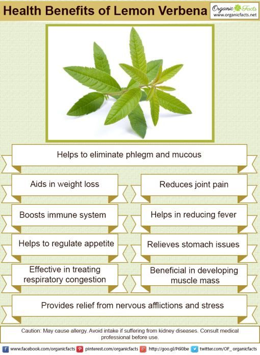 Herbs for weight loss Some of the most fascinating health benefits of lemon verbena include its ability to help with weight loss goals, protect your muscles, reduce inflammation, boost the immune system, calm the stomach, reduce fevers, soothe nerves, and clear up congestion.