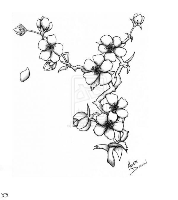 Japanese Cherry Blossom Flower Drawing Black And White 2015-2016 ...