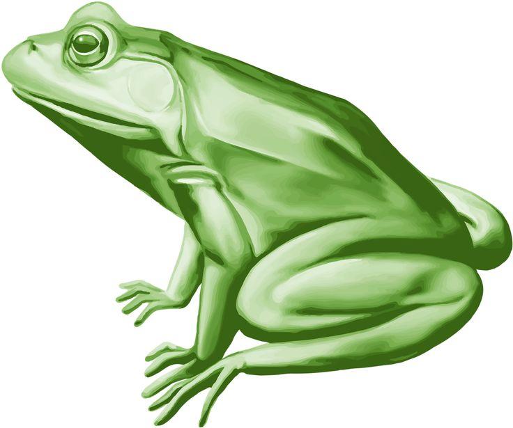 V Frog Kpm 156 best images...