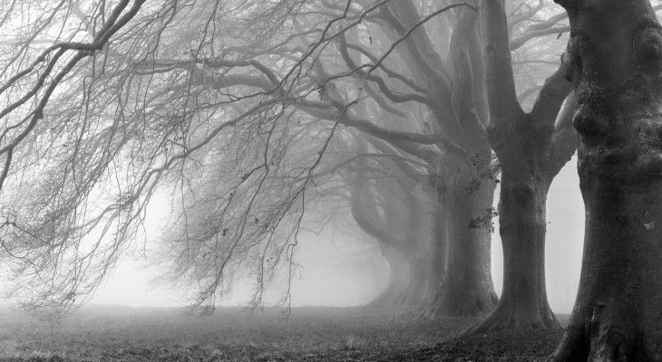 Heavy tree branches on a foggy road