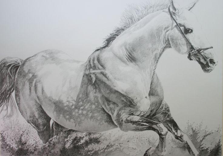White horse runnimg