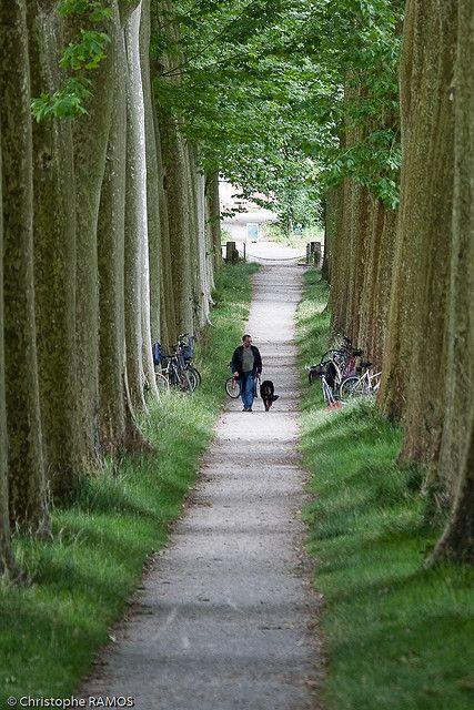 Le Canal du Midi, (Aude, )