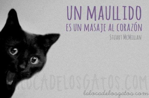 Un miau es un masaje al corazón...