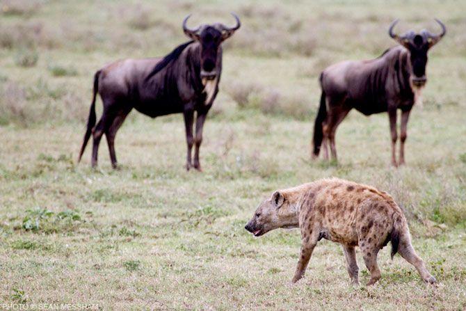 Caught in action by Photographic Journalist Sean Messham