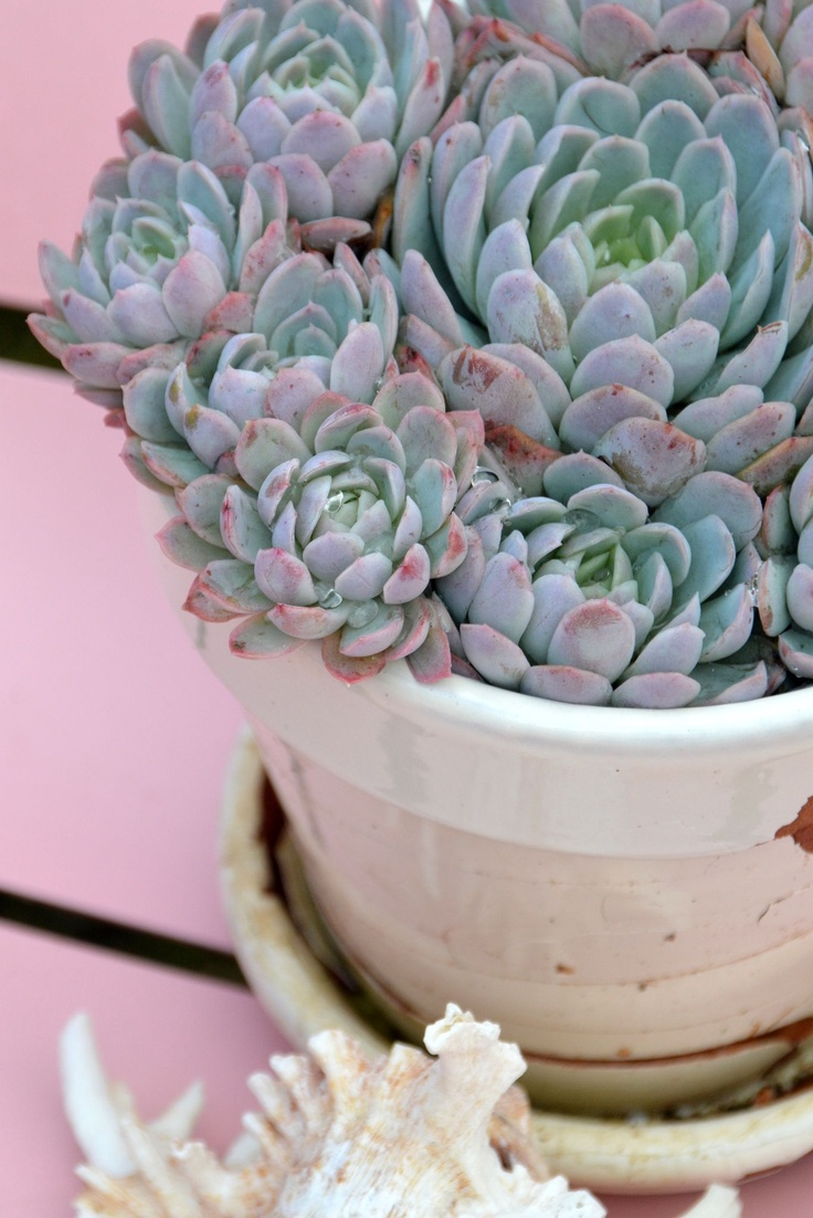 Les 19 meilleures images propos de plantes grasses for Acheter plantes en ligne