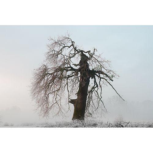 MARCIN BERA - Drzewo serce