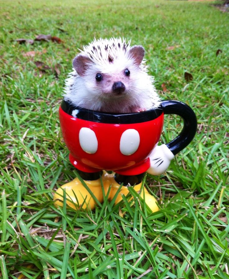 My best friend just sent me this picture of her hedgehog. I told her that the internet was about to break.