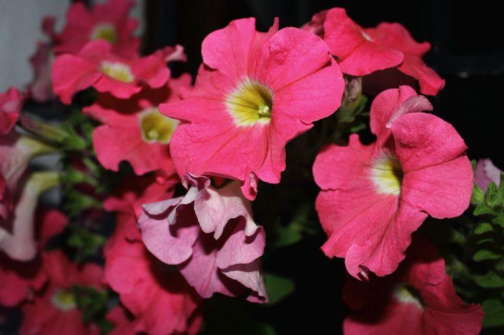 #corazon #azahar #ceremonia #concursos #cruces #crucesdemayo #flores #patios #patiosdecórdoba #tradición #mayo #mayocordobés #cordoba #andalucia #rojo #rosado #terciopelo #negro #amarillo #abanico #nieve #púrpura #petunias #yellow #heart #amarillo