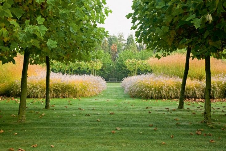 Contemporary Designers' Wirtz client garden in Antwerp courtesy of  Wirtz International via gardenista -- ornamental grass