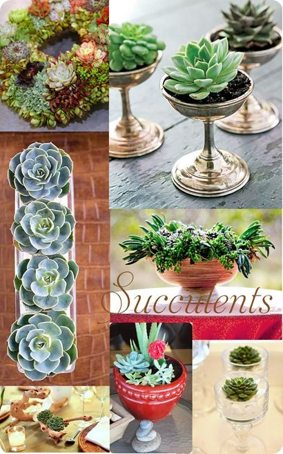 Succulents are small and hardy enough to last for months with little water.  Displayed as a wreath, in compotes, urns or vases, they're a easy way to bring low maintenance greenery indoors !