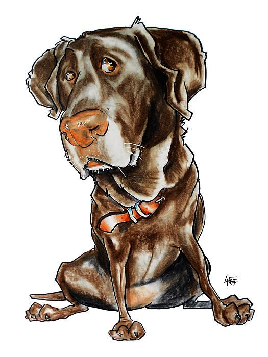 Chocolate Labs Caricatures And Labs On Pinterest