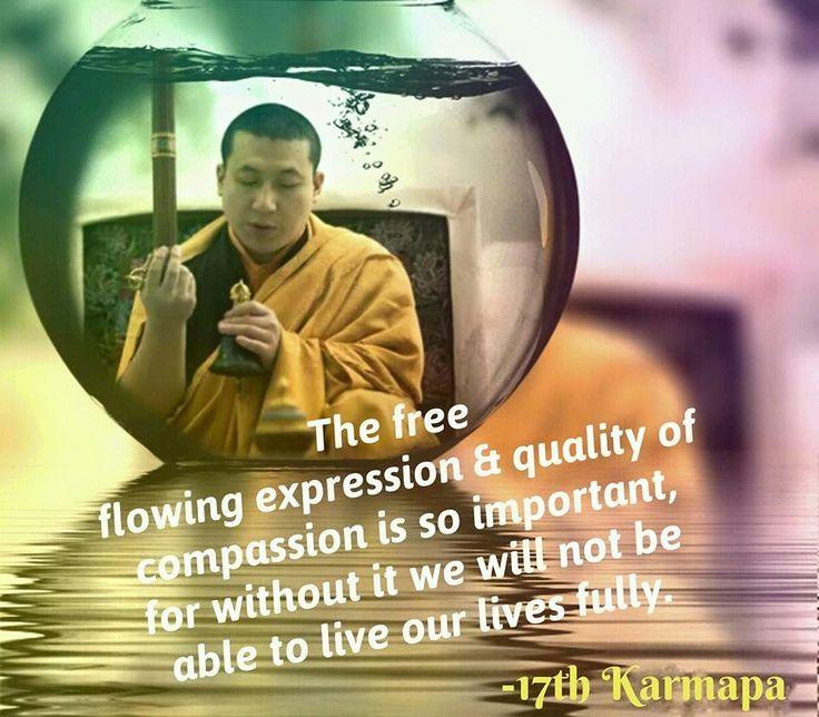 102 best 17karmapa thaye dorje images on pinterest buddhism karmapa trinley thaye dorje httpsfacebook thecheapjerseys Gallery