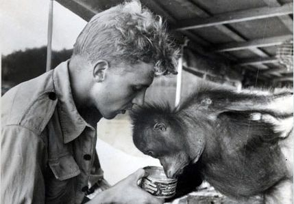"""A young David Attenborough    """"An understanding of the natural world and what's in it is a source of not only a great curiosity but great fulfillment."""""""