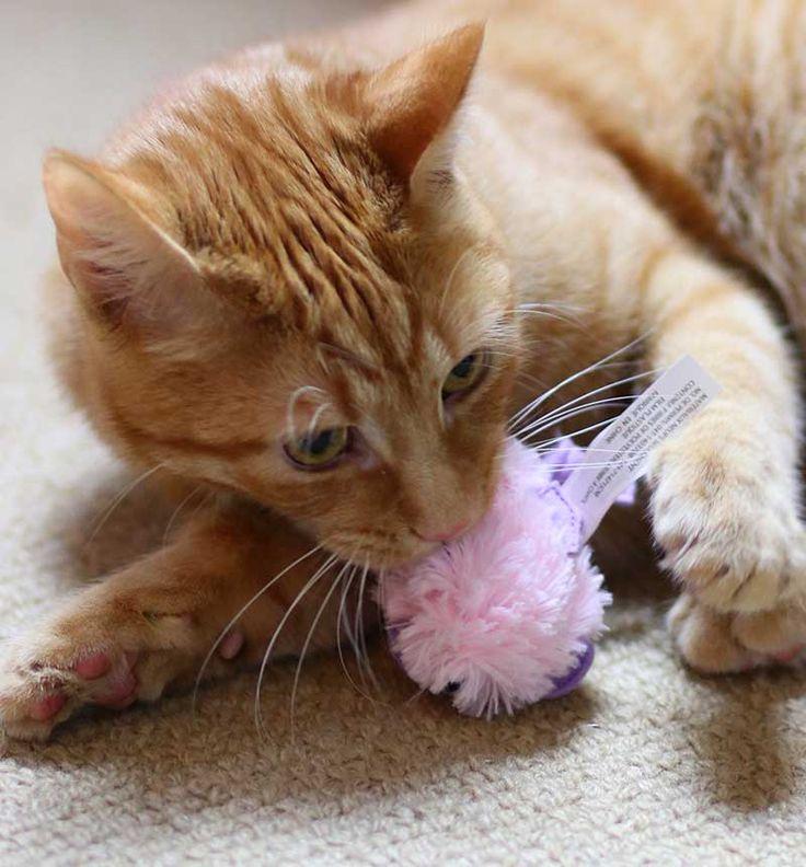 Best Kitten Toys 63