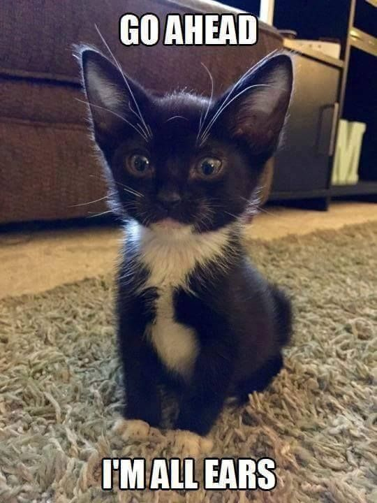 I had a cat with big ears like this.... named him Quark https://www.facebook.com/thedailykitties/photos/a. 896044180411092.1073741828.895995127082664/1708354455846723/?type=3