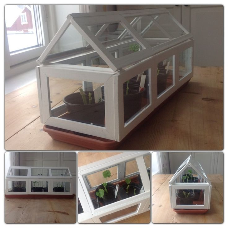 cheap picture frames!!! Minis Greenhouses, Plants Veggies Greenhouses ...