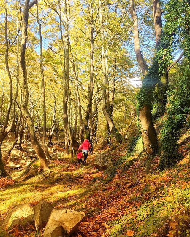 Lost in the woods  #travelling #katerinastraveldiary #visitgreece #journeygreece #forestwalk #throwback