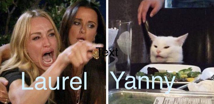 Yanny Laurel woman yelling at cat   Cat memes, Memes, Humor