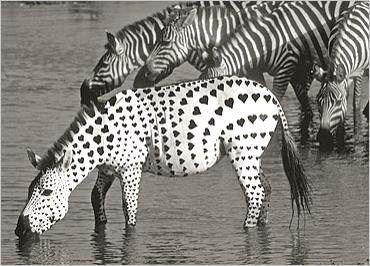 Photos en noir et blanc animaux..