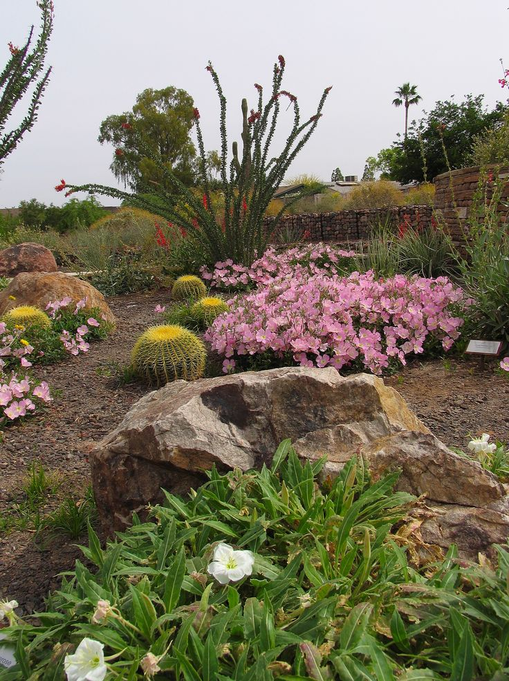 143 best images about xeriscape landscaping on pinterest