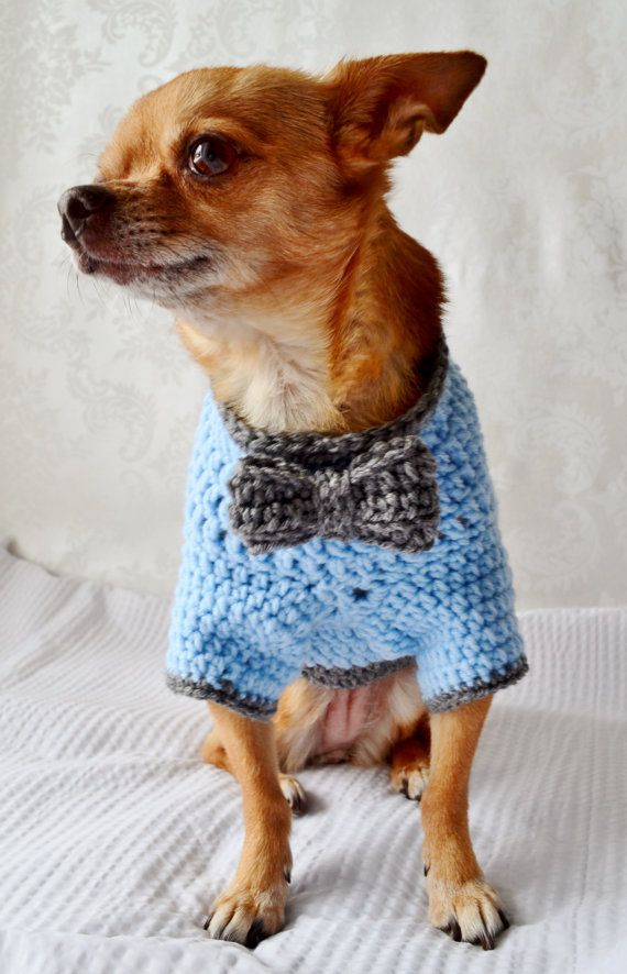 The Oxford Crochet Dog Sweater - for the distinguished Chihuahua - Janet Price!