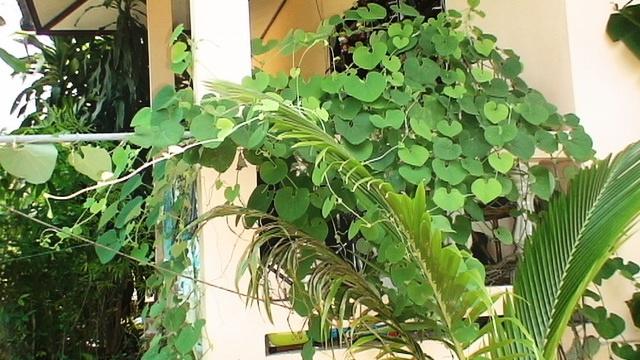 Mein Haus und #Garten in #KoSamui   - Mein Leben (über 11 Jahre) in #Thailand. Ich war aber auch schon in #Laos, #Burma, #Vietnam, #Malaysia und in #Kambodscha.   Viele #Tipps und #Informationen zum #Auswandern. - Auswandern und Frei sein. – #Weltweit #Geld #verdienen! -   ==> http://Auswandern-nach-Thailand.info
