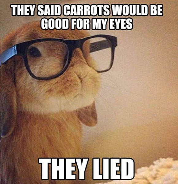 And I thought there was no such thing as glasses that fit rabbits....... I was totally wrong!