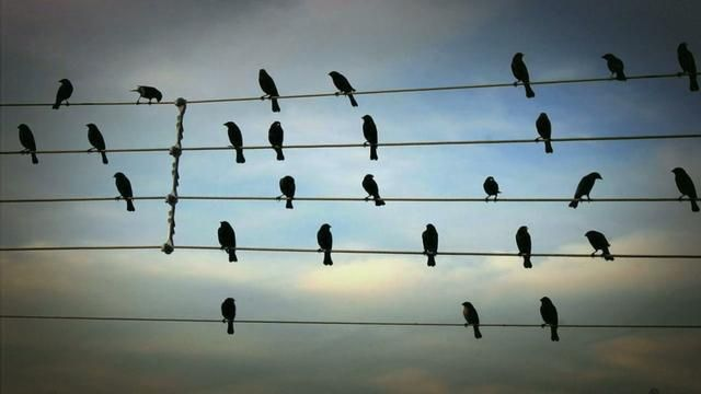 Birds on the Wires by Jarbas Agnelli. Winner of the YouTube Play Guggenheim Biennial Festival. #Birds_On_the_Wires