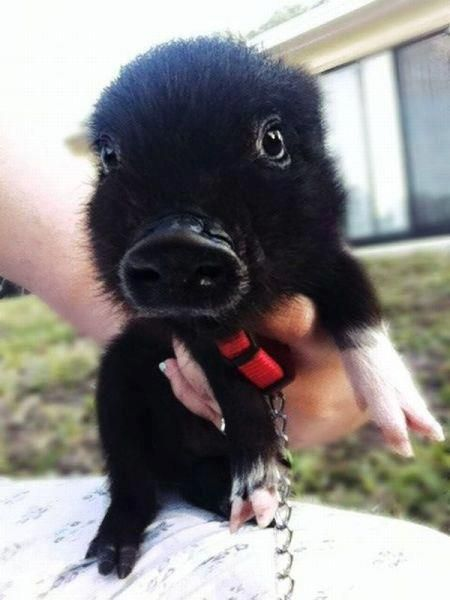 Cutest little thing EVER!