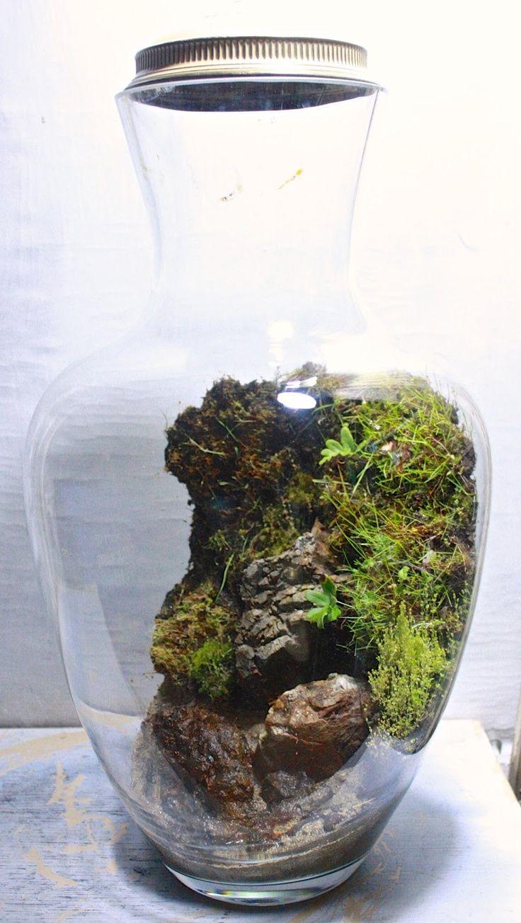 17 best images about diy plant terrariums on pinterest gardens air plant terrarium and plants. Black Bedroom Furniture Sets. Home Design Ideas