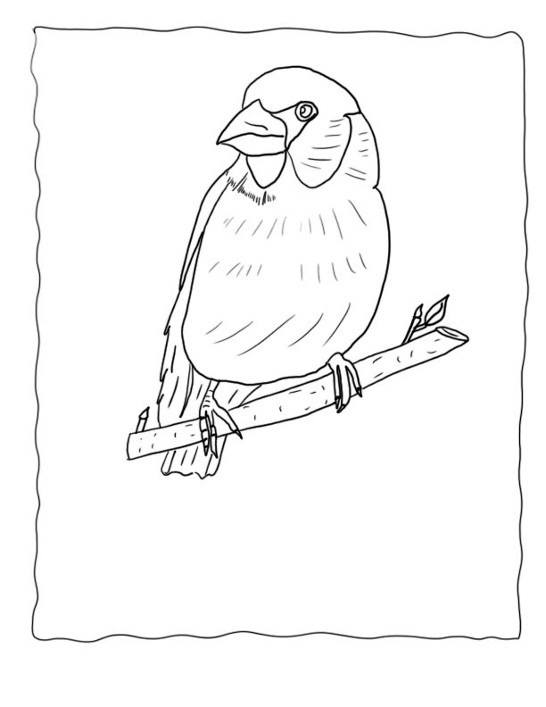 bird watching coloring pages - photo#34