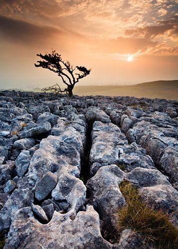 Limestone pavement at Twisleton Scar, near Ingleton in the Yorkshire Dales.