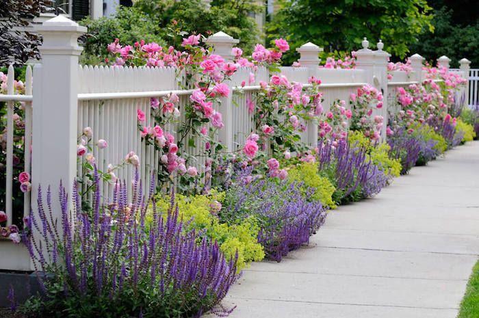 Gartenideen Weisser Gartenzaun Aus Holz Busche Mit Rosa Rosen Lavendel Garde Garten Gestaltung In 2020 Front Yard Landscaping Lavender Garden Front Yard Garden