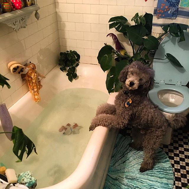 """Heard winks weeping in the bathroom and found this. """"Mom!  HELP!  I think I accidentally drowned my best friend! :(((((("""""""