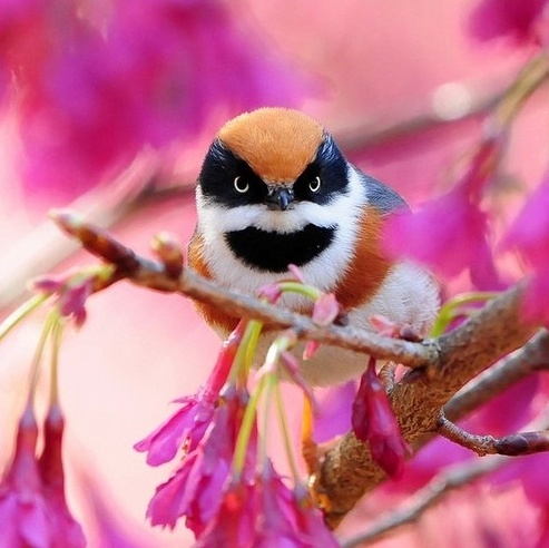 Personality: Animals, Color, Baby Owl, Beautiful Birds, Angry Birds