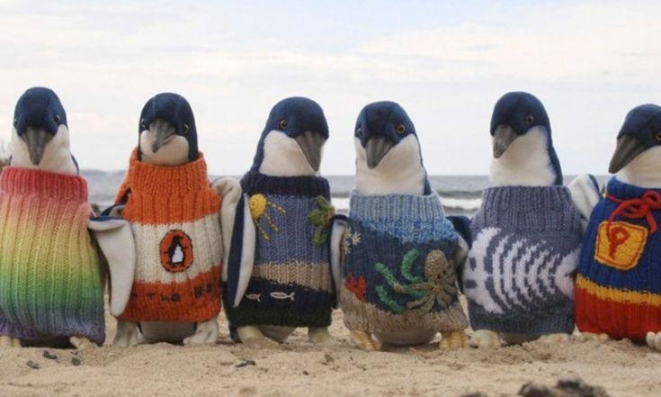 In 2013 raakten pinguïns in Australië besmeurd met olie door een olieramp. De 106-jarige Alfred schoot te hulp en breide voor de dieren minitruitjes.
