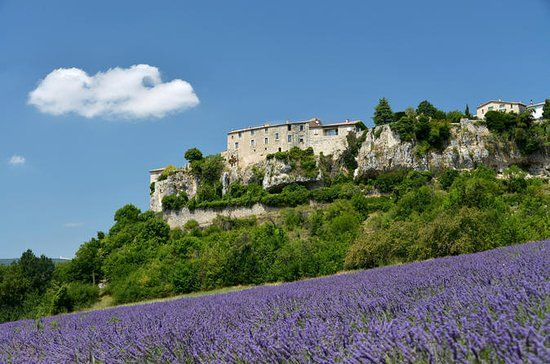 Book tickets for Provence Lavender Small Group Half-Day Trip, Avignon. Provence villages and lavender fields tour from Avignon - $68.60